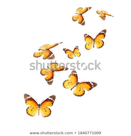 Beautiful butterflies in different actions Stock photo © bluering
