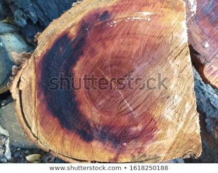 Tarwe bos volwassen gouden landbouw Stockfoto © romvo