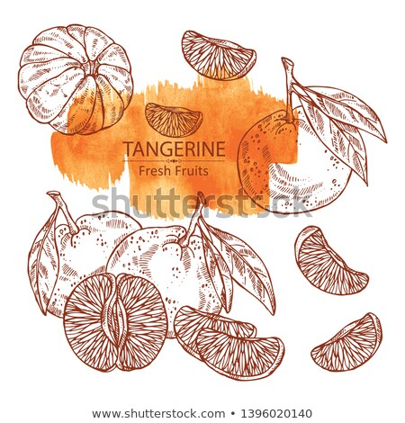 Fresco tangerina mãos agricultores jeans Foto stock © mythja