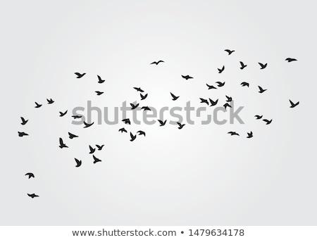 ストックフォト: 黒白 · 鳥 · 高い · コントラスト · ケーブル · ベクトル
