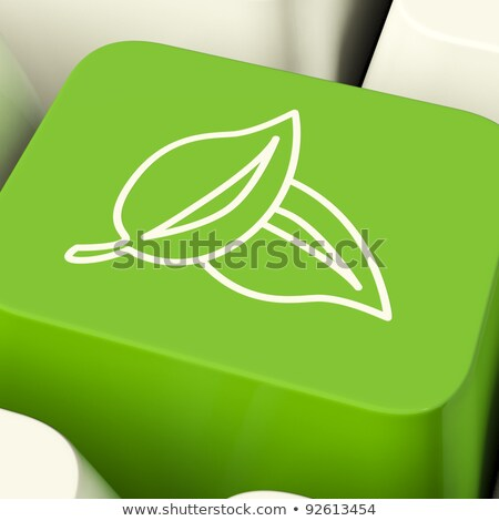 Yeşil düğme geri dönüşüm çevre dostu toprak Stok fotoğraf © stuartmiles