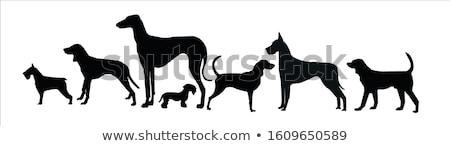 Yalıtılmış beyaz hayvan profil evcil hayvan kahverengi Stok fotoğraf © grivet