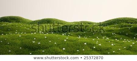 3D 草地 パーフェクト 空 テクスチャ 雲 ストックフォト © digitalgenetics
