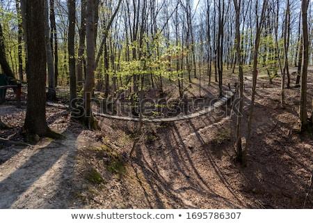 rope bridge in Hungary Stock photo © meinzahn
