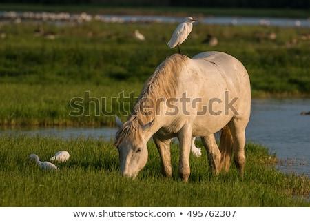 馬 · 食べ · 乾草 · ファーム · 日没 · 空 - ストックフォト © elenarts