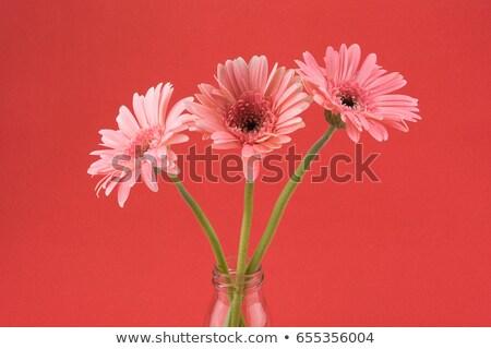 美しい ピンク カラフル 花 ストックフォト © aspenrock