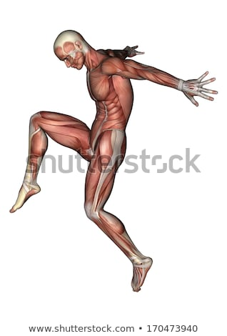 3d male medical figure with muscle map stock photo © kjpargeter