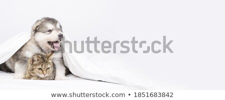 Macska pléd nyújtott ki mancs szemek Stock fotó © Margolana