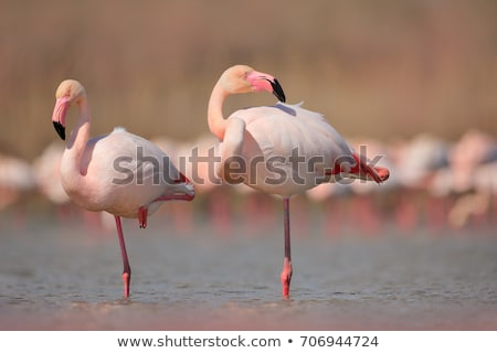 Rózsaszín flamingó sereg tengerpart víz madarak Stock fotó © tilo