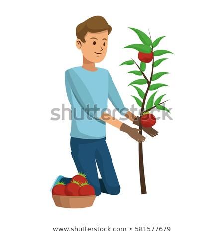 Professional Gardener Man Shaping Plant Vector Stock photo © robuart
