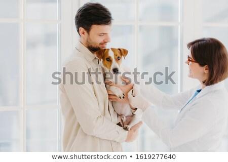 животного ухода диагностика выстрел ветеринар собака Сток-фото © vkstudio