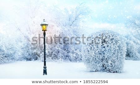 Fagyott tündér lámpás fantázia portré gyönyörű Stock fotó © zastavkin