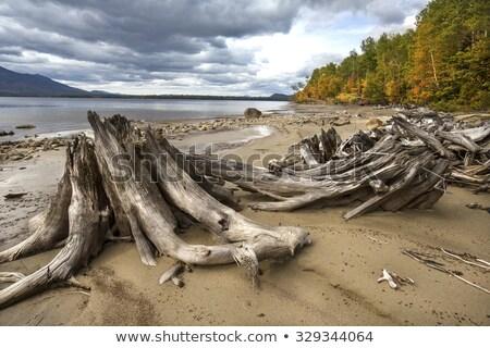 Troncos praia numeroso pequeno madeira mar Foto stock © rbiedermann