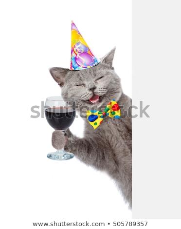 Komik kedi doğum günü arka plan eğlence Stok fotoğraf © balasoiu