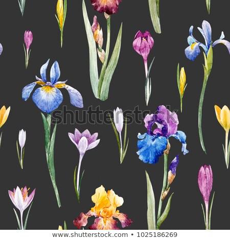 Gyönyörű írisz közelkép szépség virág levél Stock fotó © Es75