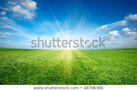 zöld · domb · búza · kék · ég · fű · nap - stock fotó © taden