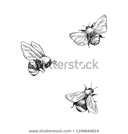 Biene · Gänseblümchen · Blume · Arbeit · Hintergrund - stock foto © manfredxy
