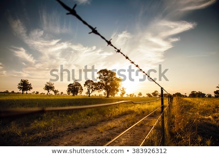 Hay and barbed wire Stock photo © Mps197