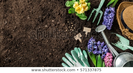 Gardening tools with hyacinth Stock photo © neirfy