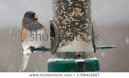 bird feeder in the snow stock photo © manfredxy