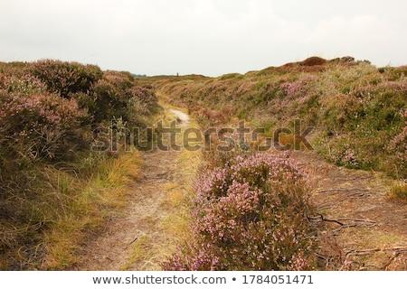 Dinamarca velho agricultura terra verão nuvens Foto stock © Klinker