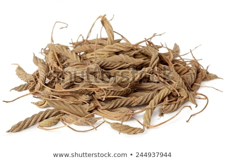 Helicteres Isora (Marod Phali (hindi)) Stock photo © ziprashantzi