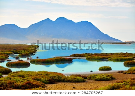 Las Salinas Cabo de Gata Almeria flamingos Spain Stock photo © lunamarina