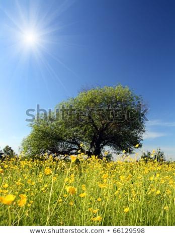 Estranho árvore paisagem céu grama beleza Foto stock © Mikko