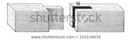 Mortise and Tenon, vintage engraving Stock photo © Morphart