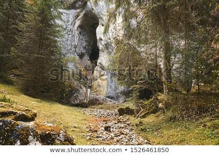 Vista cueva hermosa naturales reserva naturaleza Foto stock © taviphoto