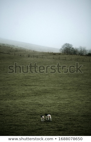 Stock photo: Foggy field on the mountain