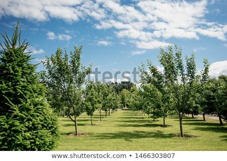Genç ağaç mavi boyalı yeşil yaprakları kâğıt Stok fotoğraf © blackmoon979