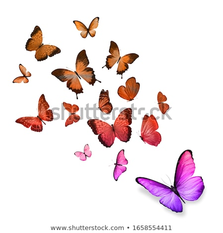 Background with monarchs and morpho Stock photo © blackmoon979