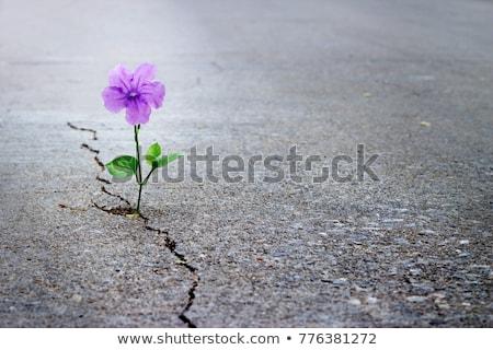 花 白 孤立した 自然 葉 緑 ストックフォト © OleksandrO