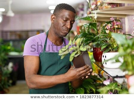 Plants Pots, Flowers Displayed on Shelf Greenhouse Stock photo © robuart