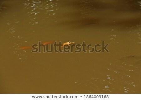 Восход лягушка джунгли полу Сток-фото © macropixel