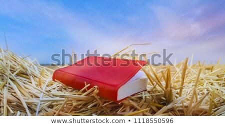 Genesis Book & Sky Stock photo © Gordo25