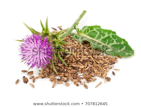 blessed milk thistle stock photo © eldadcarin