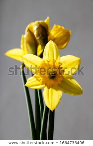 Bloemen Geel geïsoleerd witte bloem achtergrond Stockfoto © homydesign