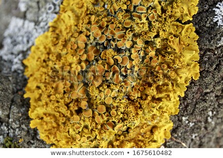 カラフル · 菌 · 詳細 · 自然 · クローズアップ · 緑 - ストックフォト © sarahdoow