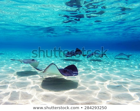 Grand Cayman Stock photo © disorderly