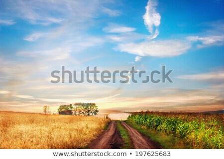 Idyllique route deux champs peu profond Photo stock © dariazu