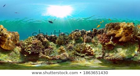 Subaquático coral jardim macio esportes natureza Foto stock © smithore