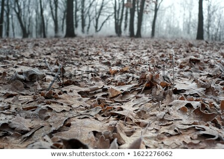Grond vorst gras gedekt winter Stockfoto © MKucova