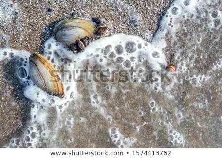 Stock fotó: Folyó · kagylók · part · víz · fű · körül