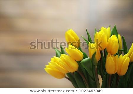 Vaso amarelo tulipas buquê ícone primavera Foto stock © compuinfoto
