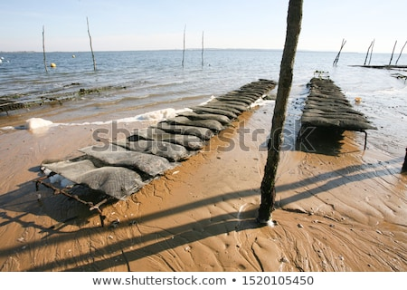 Growing oysters at low tide, port of Arcachon Stock photo © FreeProd