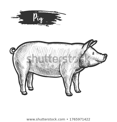 piggies and Sow Stock photo © devon