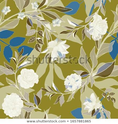 трава · цветок · лист · изолированный · белый · медицина - Сток-фото © marilyna