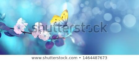 Kék tavaszi virágok homály zöld levelek lány tavasz Stock fotó © simply